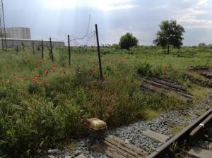 Landscape - Šid, Serbia